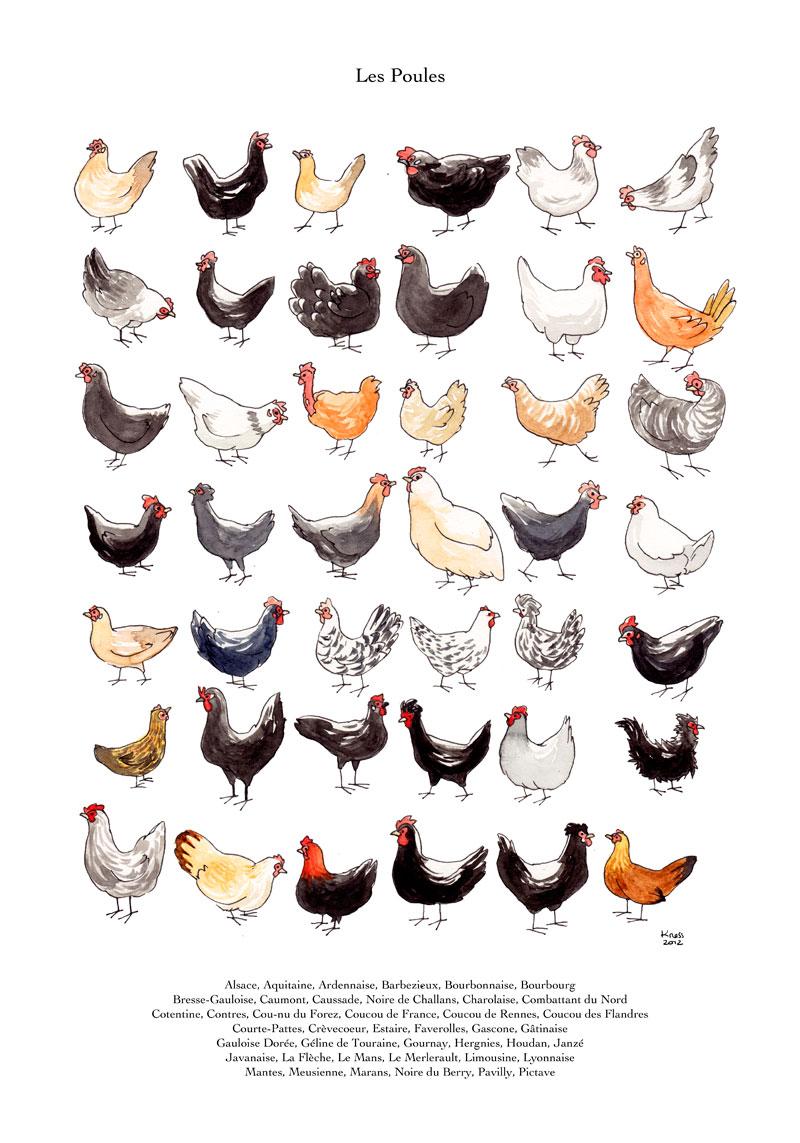 aquarelle collection de poules