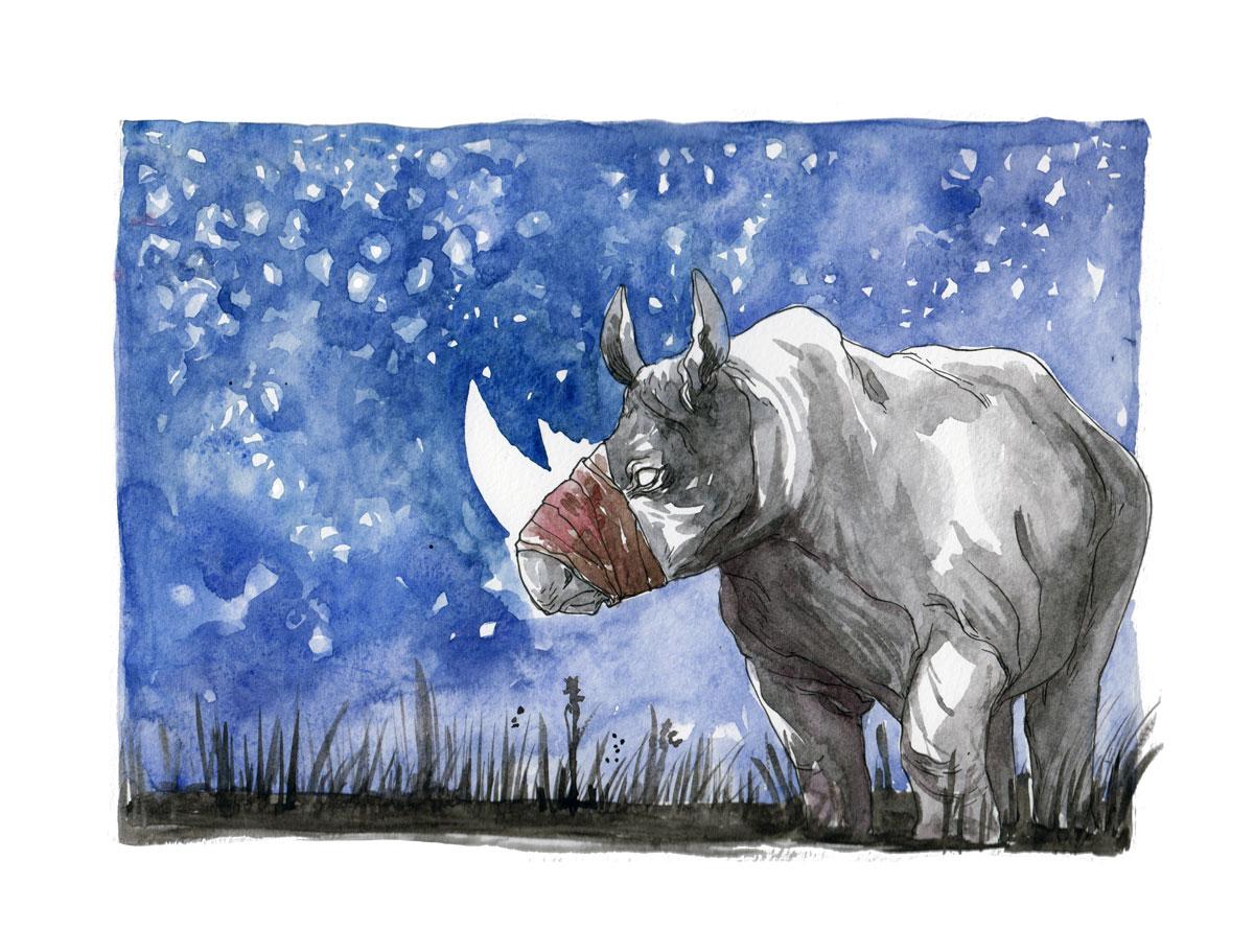 illustratrice montréal - rhinocéros aquarelle