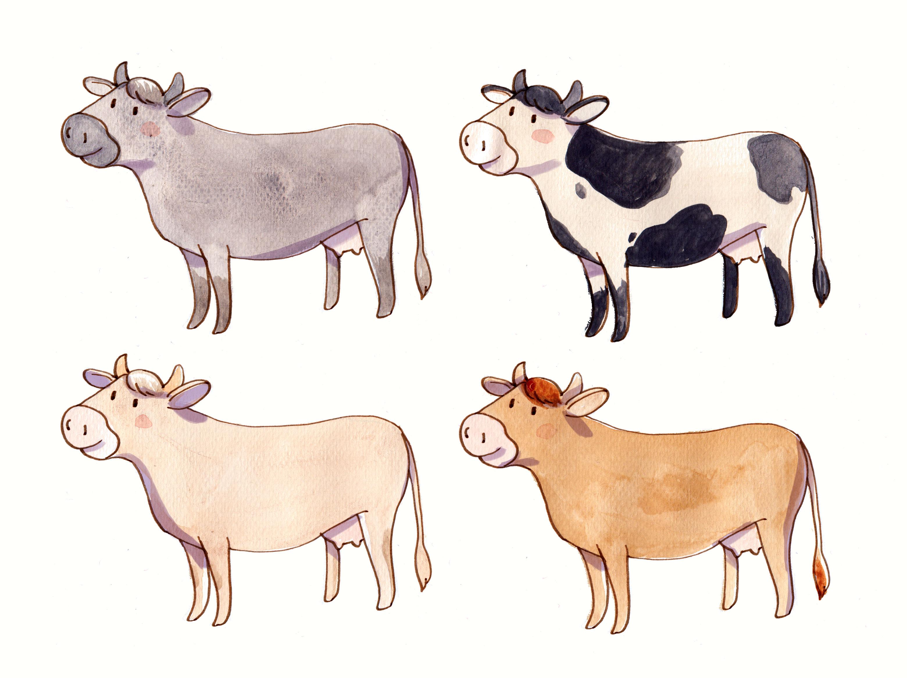 aquarelle vaches
