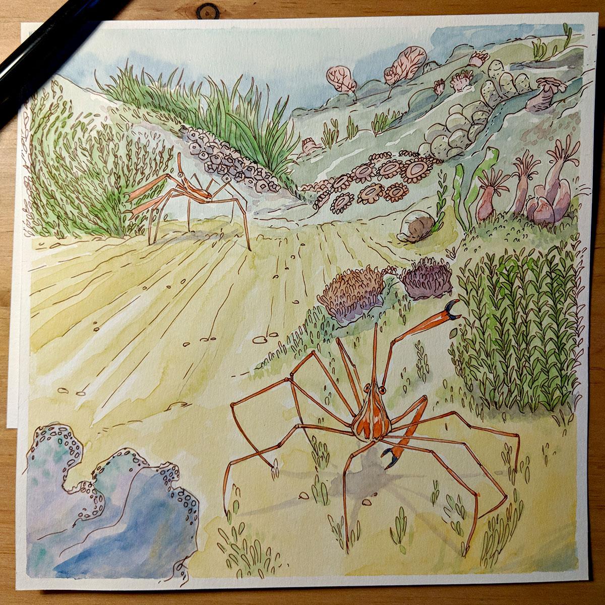 Détails aquarelle crabe