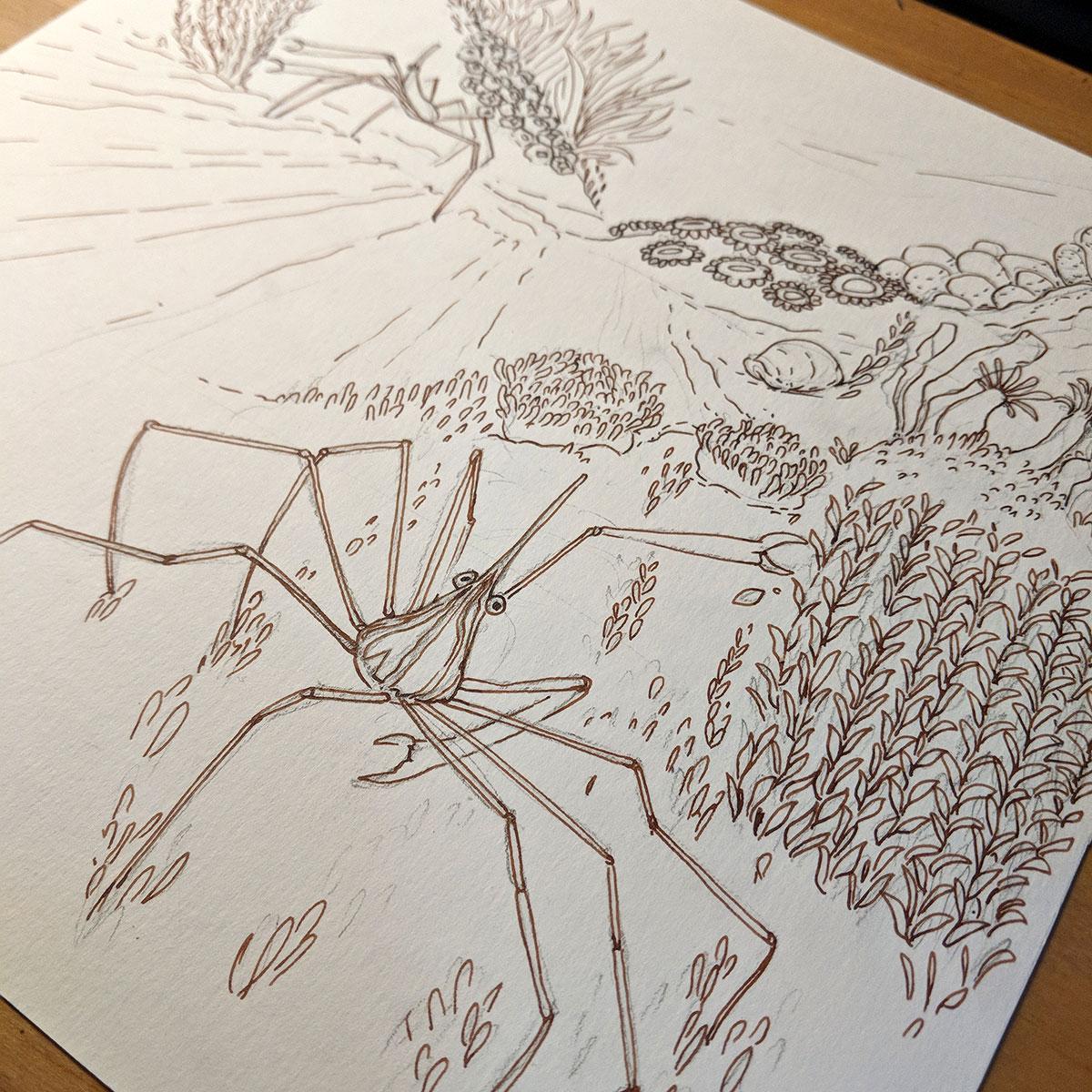 Encrage crabe jardinier