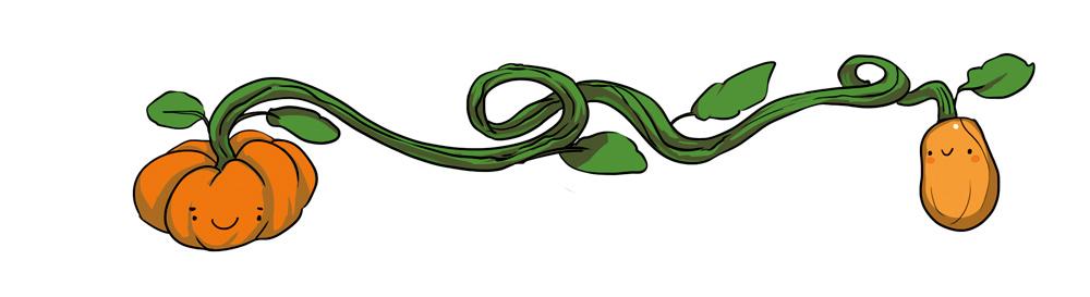 legumes illustration numérique