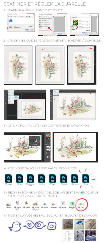 scanner une aquarelle étapes