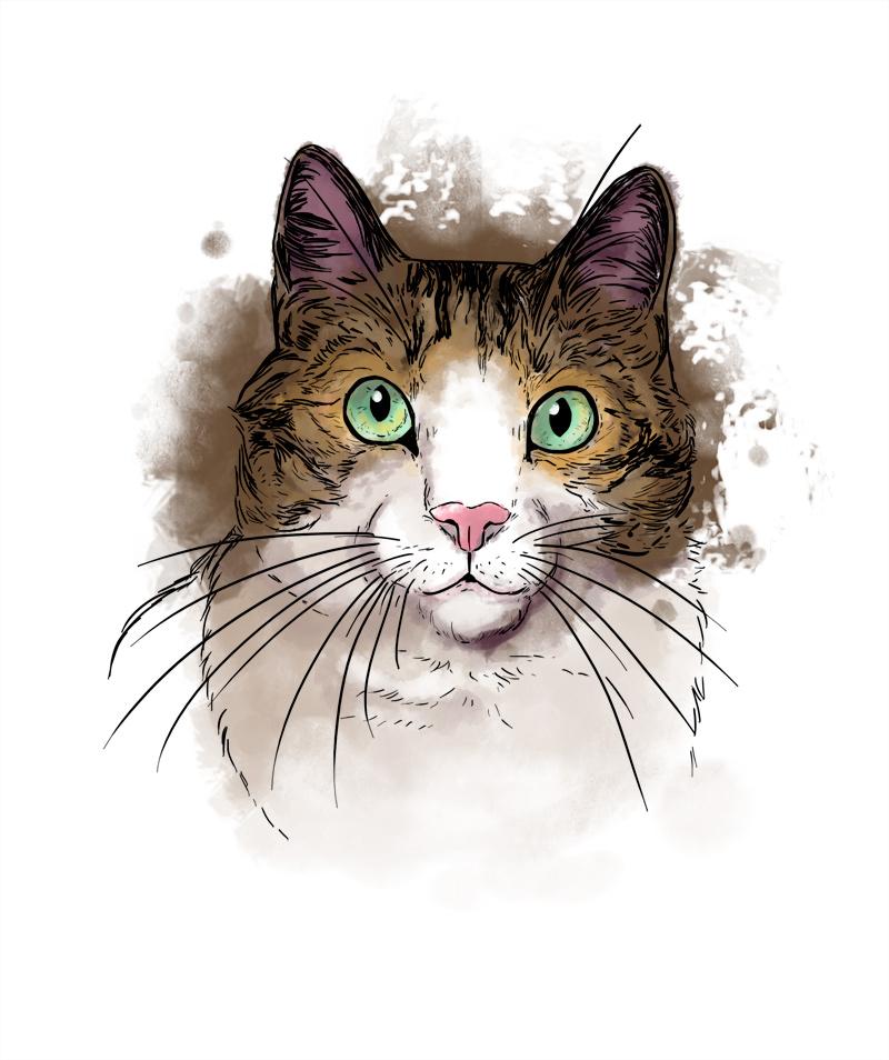 illustration numérique chat