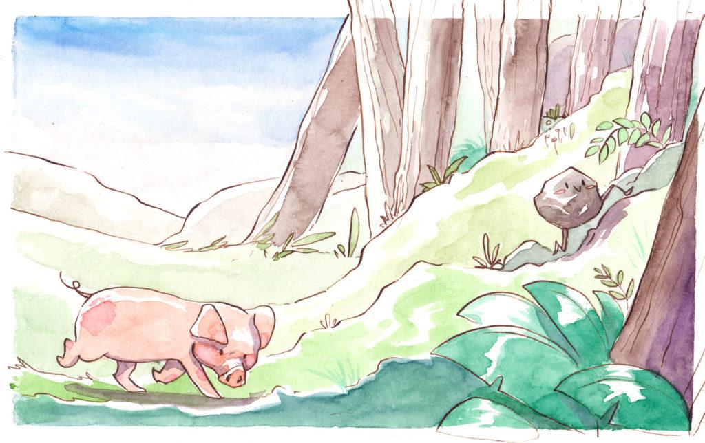 illustratrice jeunesse aquarelle cochon