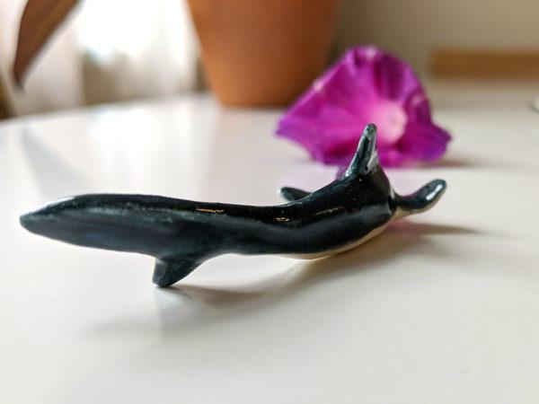 Requin porcelaine