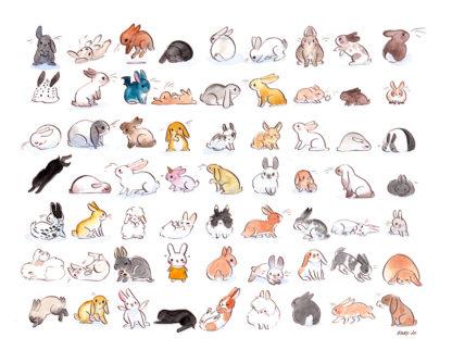 illustration lapins