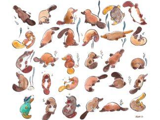 30 platypuses