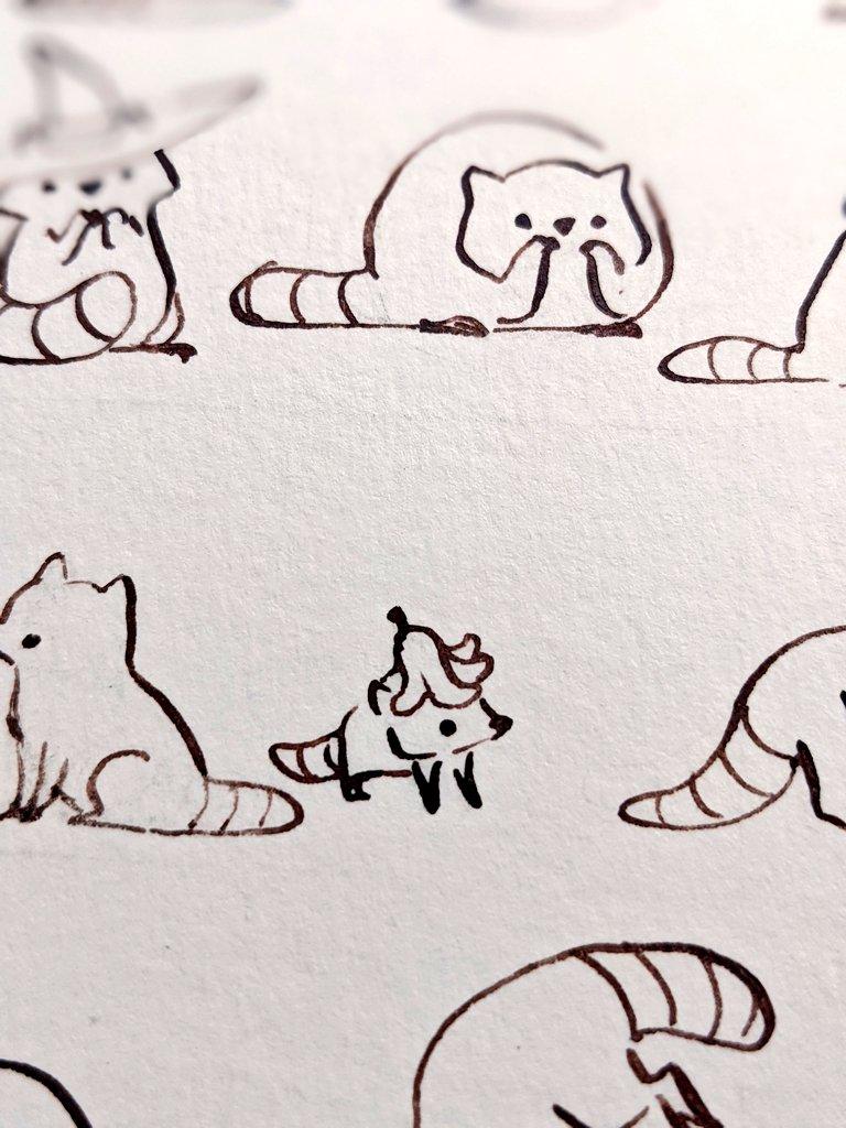 dessin de ratons laveurs - encrage