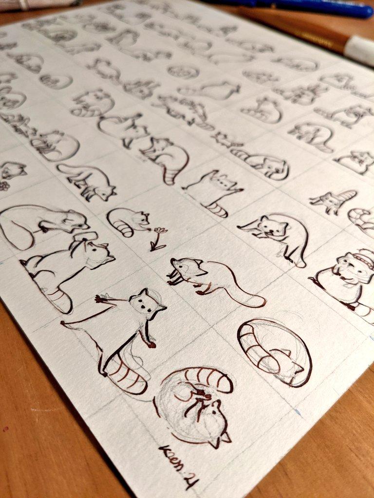 Encrage dessin raton laveur