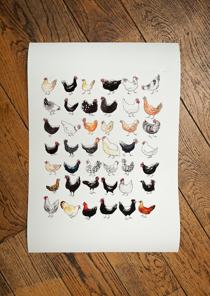 tirage dessin des poules collection