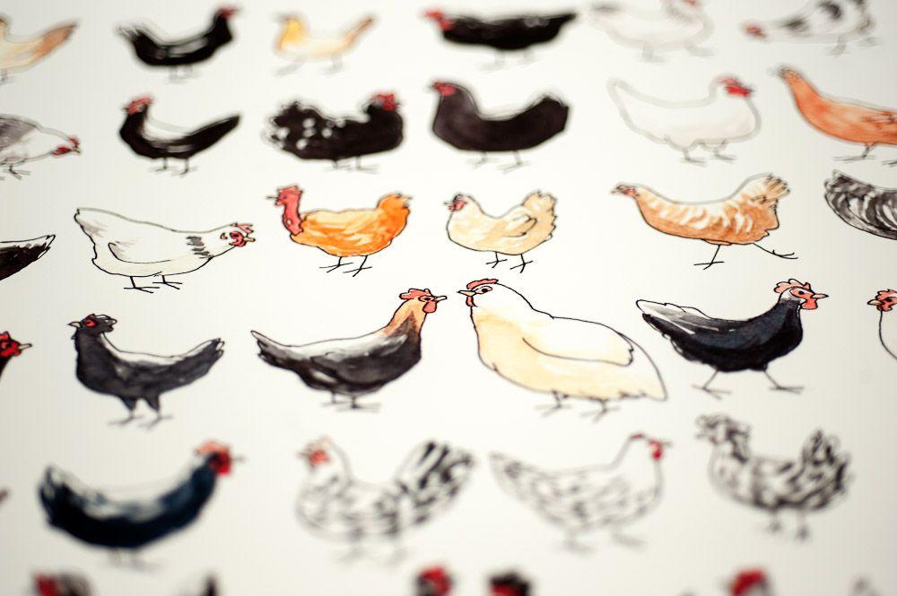 Dessin de poules, détail des formes et couleurs.