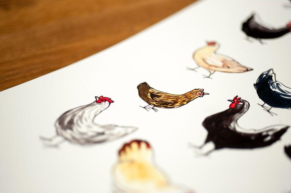 dessin de poules, détail petite poule brune