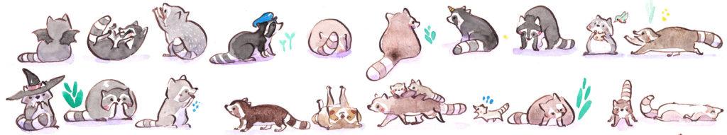 aquarelle ratons laveurs