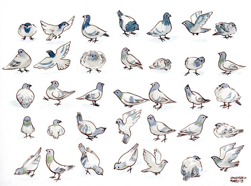 Motif Animaux : Pigeons
