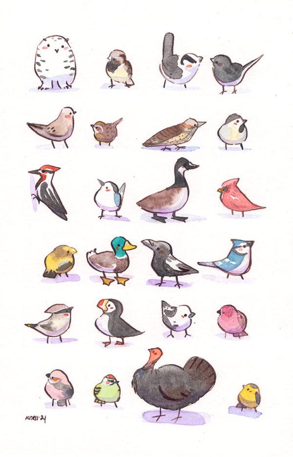 24 quebec winter birds